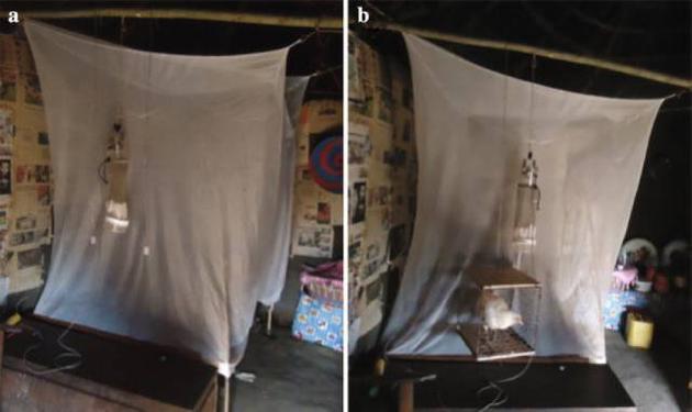 研究者用各种气味分子做捕蚊实验的照片,左图是使用鸡的气味分子,右图是使用一只活鸡。图片来源于该研究的原始论文。