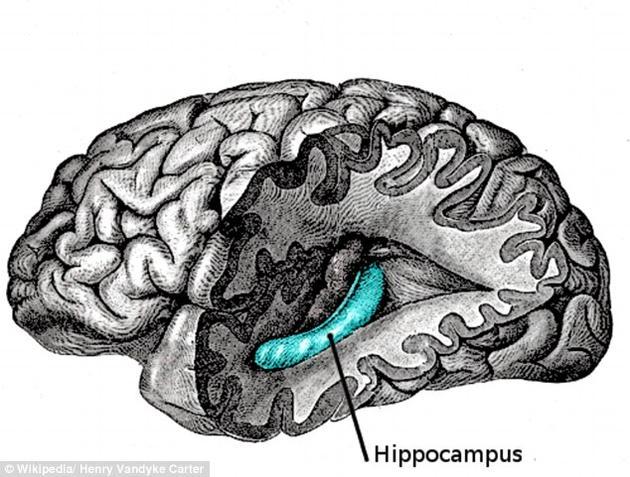 海马体是大脑中负责记忆的区域,它利用神经元来感受空间。如果神经元被依次排开放在一架飞机中,它们的活动将被局限在一个特定的点上。
