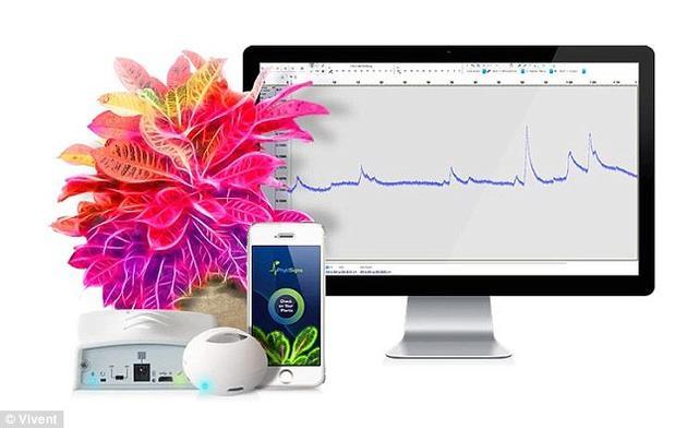 该设备利用两个电极来测量植物的电压,一端插进土壤中,另一端连接到叶片或茎上。如果扬声器发出了声音,就说明电压发生了变化。电压变化得越快,发出的尖叫声也就越高。