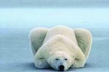 《自然》杂志:过度开发仍是生物灭绝的主要原因