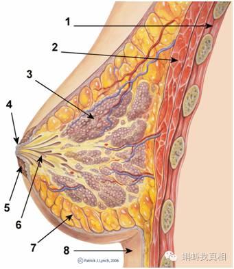 乳头增大精油是什么原理_精油开背图片