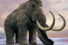 科学家称最后一批猛犸象或死于缺少饮用水:时间约5600年前