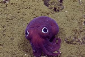 """这只超萌的海底""""怪物""""让发现它的科学家不小心集体笑翻"""