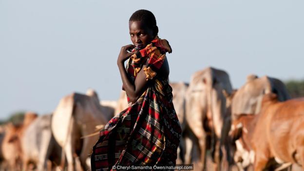 牲畜可能是炭疽病之源。