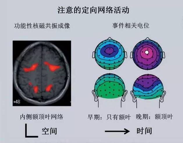 集中注意时活动的脑区和随时间变化情况