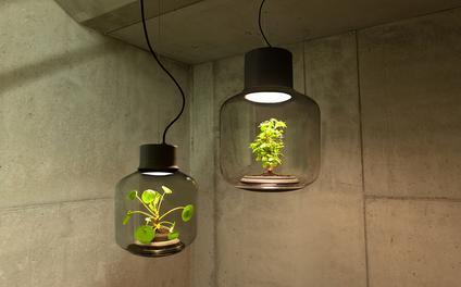 在这个密闭灯具里 植物不用打理也能长得很好