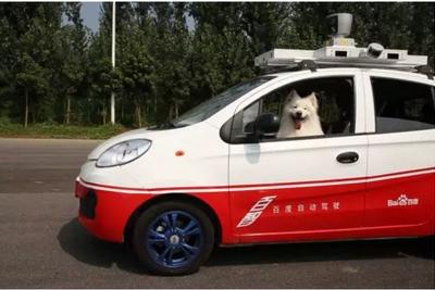 百度无人车参加了一次驾照考试,司机是两条狗