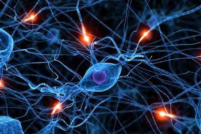 """大脑神经细胞存在""""热传感器"""":蛋白质会释放降温信号"""