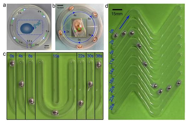 可变形液态金属机器在内含电解液的容器或各种槽道中的自主运动情形
