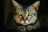 有着明亮绿色眼睛的猫咪并不鲜见。