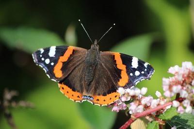 报告称英国15%野生动物面临灭绝风险:对自然有压倒性影响
