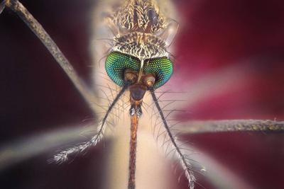 盖茨:全球最致命的动物是蚊子 比鲨鱼还可怕