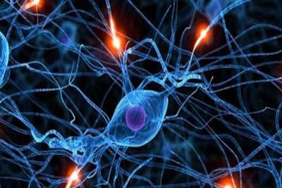 快乐与厌恶神经细胞相互抑制:有助开发治疗情感障碍新方法