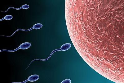 男性承担避孕责任:新型男性避孕药可暂时性阻止精子游动