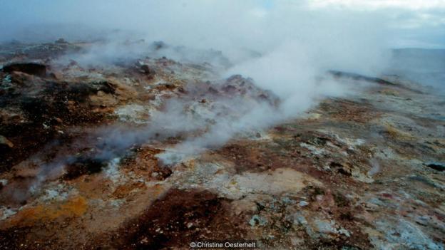 """冰岛火山区发现的名为""""Galdieria sulphuraria""""的温泉红藻。"""
