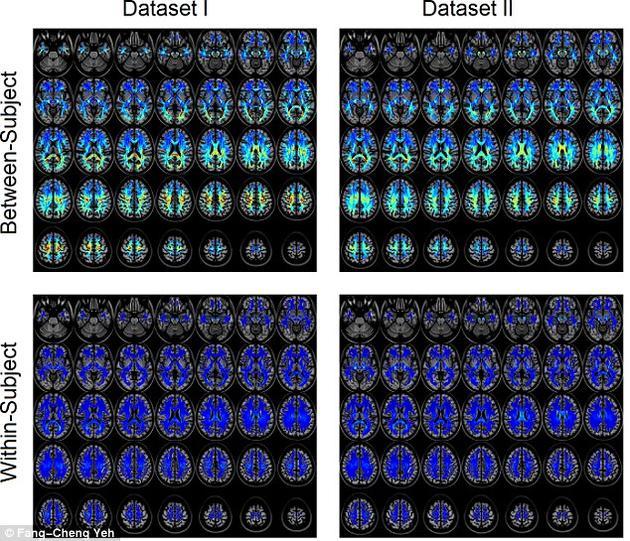 该团队共开展了17000多次实验,能够以接近百分之百的准确率,判断出两处连接图谱是否属于同一个人。