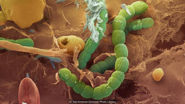 细菌在地球上无处不在。