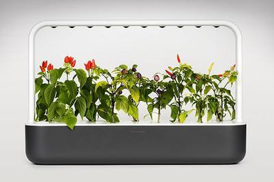 能晒太阳能浇水 这年头连花盆都智能了