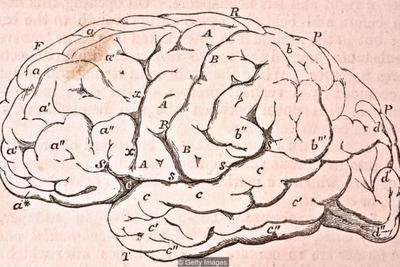 人类智力未必如想象中独特:少数几种动物或有自我意识
