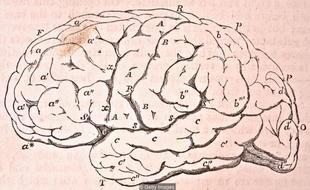 人类智力未必如想象中独特