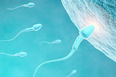 """日本用ES细胞制成""""精子干细胞"""":或解不孕难题"""