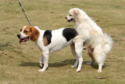 要做宠物版Tinder,Peto让你与附近宠物爱好者一对一约会