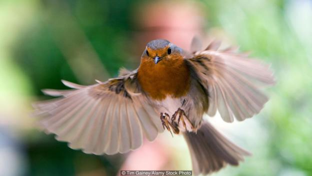 这种化学导航器将能够告诉鸟类,它的飞行方向是否正确