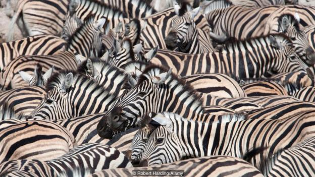 如果你需要根据一只斑马来概括所有哺乳动物的特征,你会选择从哪里入手?