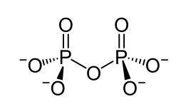如图,焦磷酸根两个磷酸根共用一个氧原子,通过共价键相互连接,每个磷酸根离子则由中心的磷原子与环绕磷原子的4个氧原子(核自旋数为零)构成。两个磷酸根离子的核自旋(都来自于磷原子)纠缠在了一起,总共能形成四种不同的搭配方式:一种单态(singlet state,总自旋为0)和三重态(triplet state,总自旋为1)。在三重态下系统只能维持微弱的量子纠缠,而单重态下的系统能够最大程度地保证量子纠缠——这对于量子计算是必不可少的先决条件。