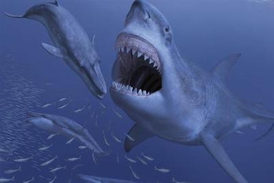 动物也挑食?研究人员认为挑食让巨齿鲨灭亡