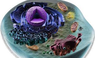 地球复杂生命共同微生物祖先已找到