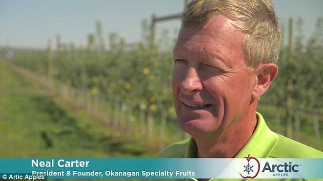 奥卡诺根特色水果公司的创始人尼尔·卡特(Neal Carter)称,转基因苹果的出现对种植者来说是好消息,因为他们不用将褐变或碰伤的苹果扔掉,而种植出来的苹果品质也会更高。