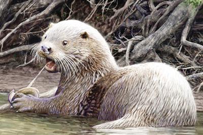 """600万年前巨型水獭新种化石现昭通:命名""""似獾泰国水獭"""""""