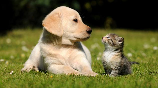 宠物间的较量 研究发现猫的智商不比狗低图片