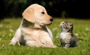 宠物的较量!研究发现猫智商不比狗低