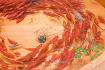 功夫不负有心人画了12年金鱼 他竟然把金鱼画活了