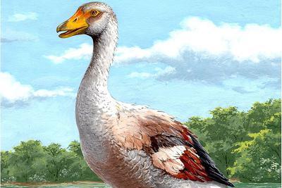 吓人的古代巨鹅:身高或超1.5米 翅膀用来打斗