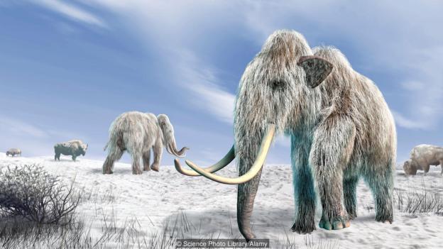 真猛犸象的艺术想象图