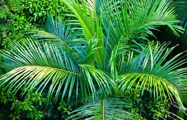最终,随着陆地植物的兴盛,这一循环终于得以打破。光合作用植物在全球迅速生长,使大气中氧气含量大大增加,带领地球跳出了低氧的死循环。