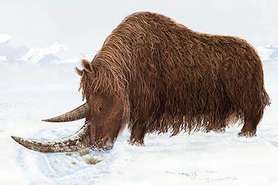 中国科学家推翻达尔文猜想:冰河世纪物种起源于西藏?