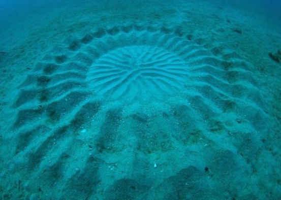 """这个出现在日本海域""""神秘圆圈""""直径大约2.1米"""