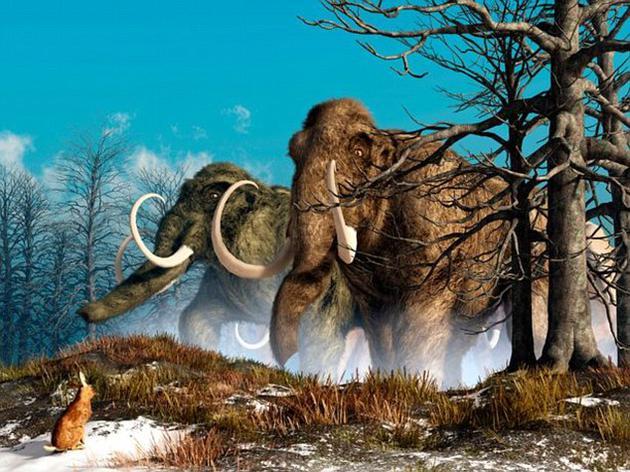 猛犸象在上一次冰河时期一度称霸欧洲、亚洲、非洲与北美洲。后来由于气候变化和人类捕猎的双重影响,在距今约4500年前销声匿迹。