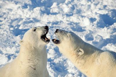 """北极""""发烧""""气温飙升超0℃:高出同期约27℃"""