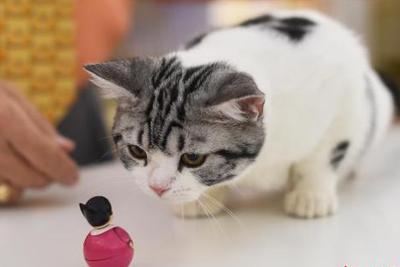 保护澳濒危动物:澳大利亚政府拟杀200万流浪猫