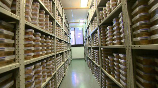 """哈佛大学脑组织资源中心是世界上规模最大的""""大脑银行""""之一。"""
