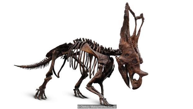 恐龙生活的年代距我们其实很近。