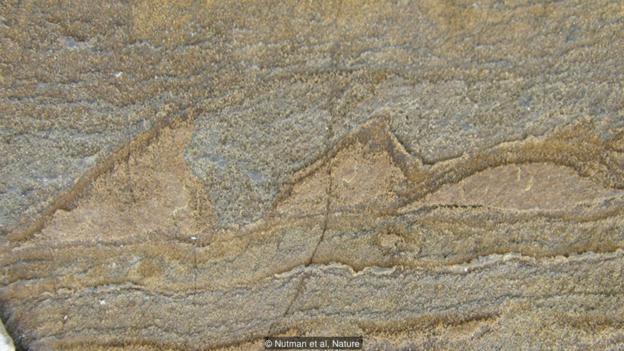 这些波浪状的图案可能是37亿年前形成的化石。