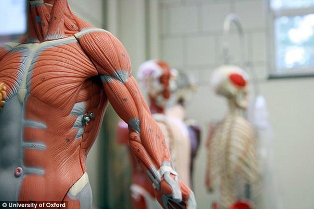 """牛津大学研究人员预测,我们很快便可研发出长有""""血肉之躯""""的机器人。"""