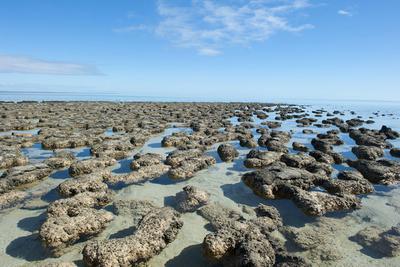地球上最初的生命是什么?38亿年前最古老岩石中找到答案