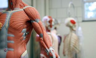 长有皮肉的机器人或培育人体组织